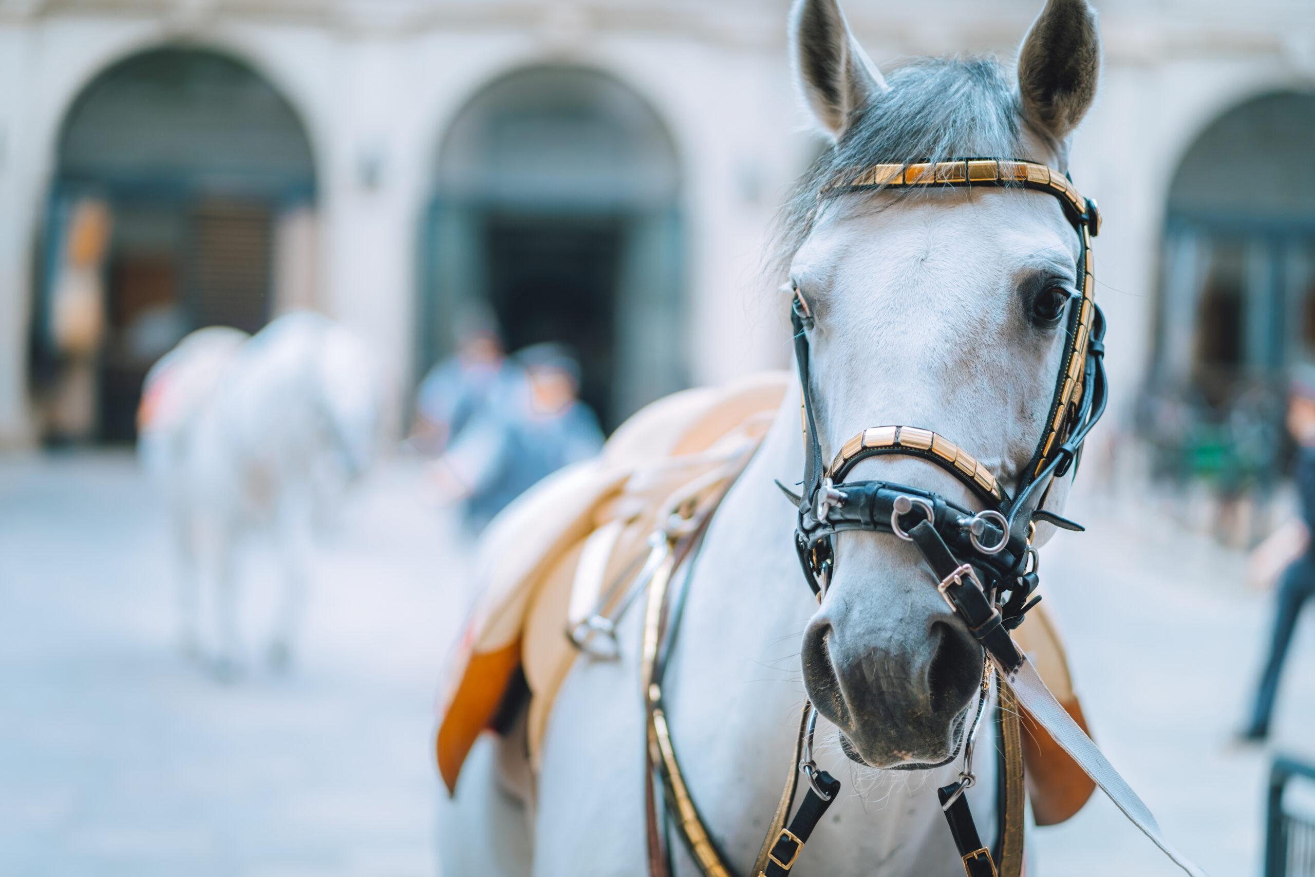 Hest#1